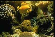 [aquarium]