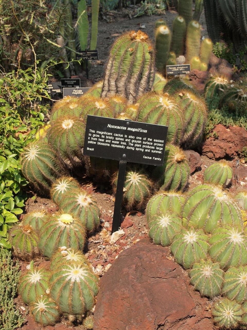 Visit to Huntington Gardens