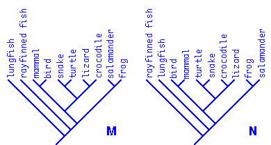 What can you learn from a cladogram