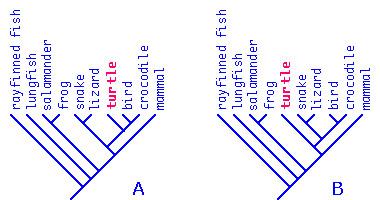 Polytomies introduction to phylogeny hard or soft polytomies ccuart Choice Image
